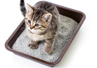 kot w kuwecie