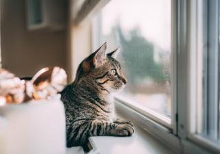 Kot i okno