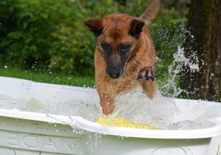 Pies w baseniku