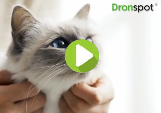 Dronspot