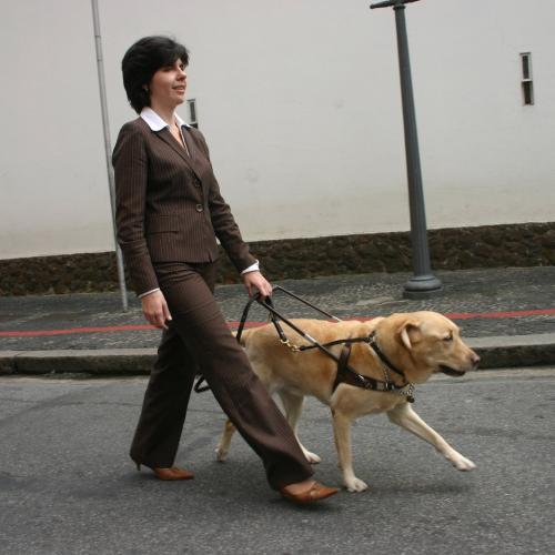 Pies przewodnik